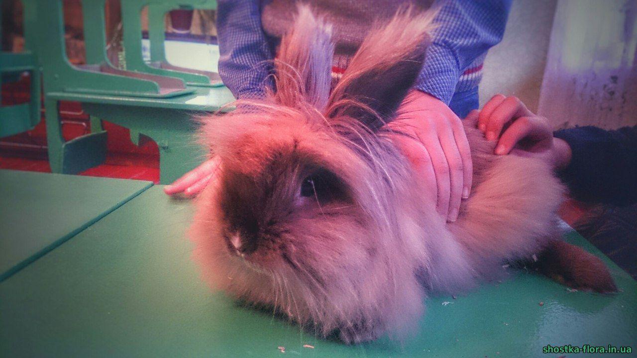 як доглядати за кроликом