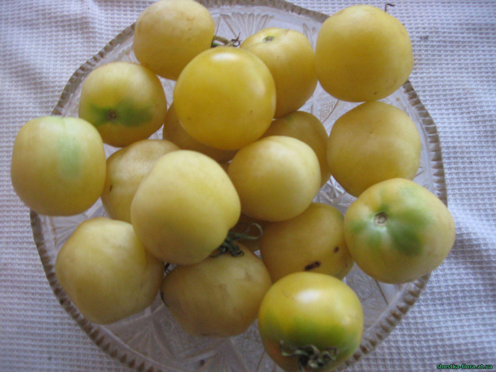 Найкращі сорти томатів для України