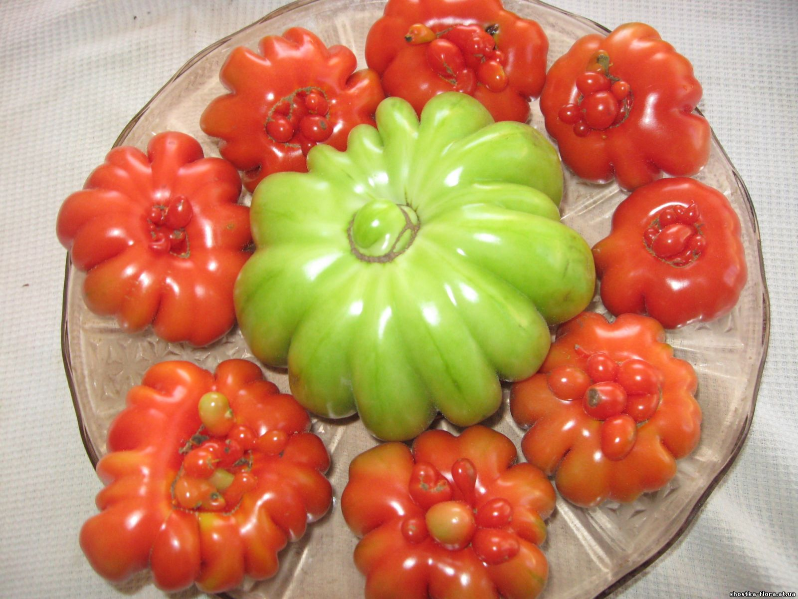 Як підживляти помідори